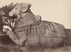 Mysore. Colossal bull at Chamondee. [Chamundi.]